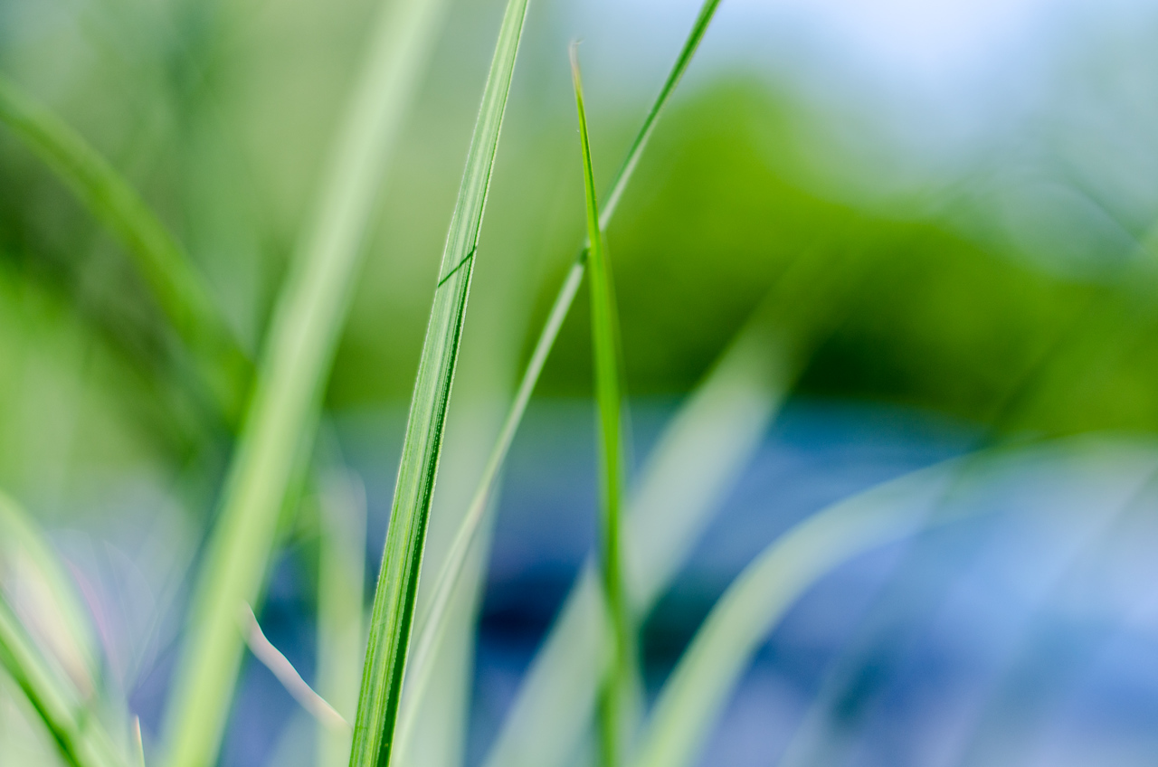 Grass and bokeh, color